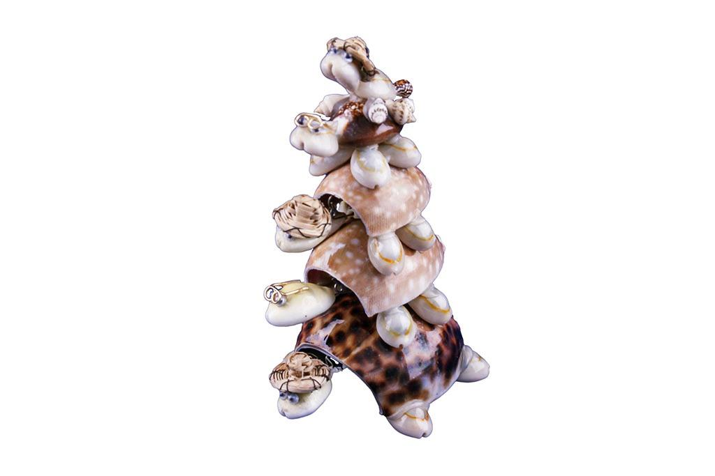 Tartarughe conchiglia set 5 pezzi