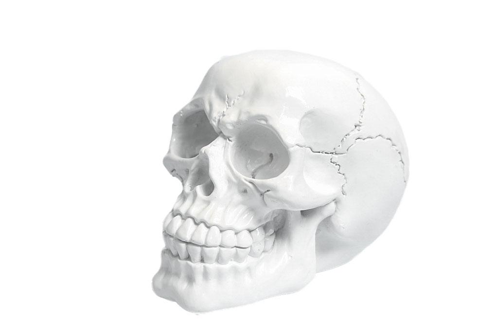 Teschio resina bianco medio cm. 11x8,5